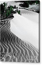 Cape Le Grande Sand Dune Acrylic Print