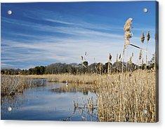 Cape May Marshes Acrylic Print by Jennifer Ancker