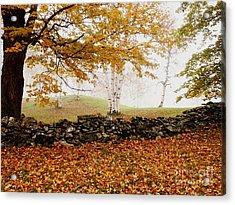 Caper Hill Birch Acrylic Print