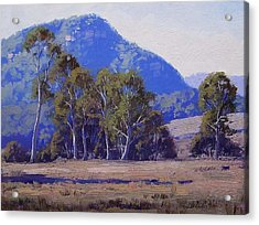 Capertee Eucalyptus Trees Acrylic Print by Graham Gercken