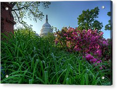 Capitol Dome Acrylic Print by Michael Donahue