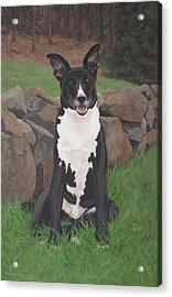 Acrylic Print featuring the painting Capone by Sandra Chase