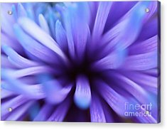 Captivation Acrylic Print by Inspired Nature Photography Fine Art Photography