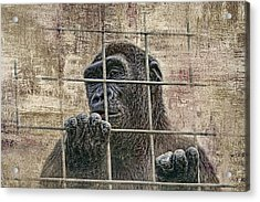 Captivity Acrylic Print by Tom Mc Nemar
