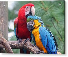 Grooming Session Acrylic Print
