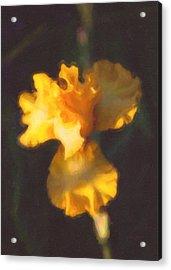 Capturing Sunshine  Acrylic Print by Omaste Witkowski