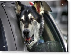 Car Ride Acrylic Print by Dennis Baswell