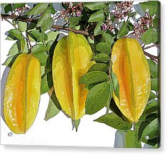 Carambolas Starfruit Three Up Acrylic Print by Olivia Novak