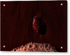 Carapace 1 Acrylic Print