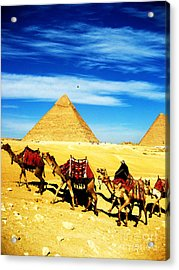 Caravan Of Camels 2 Acrylic Print by Alison Tomich