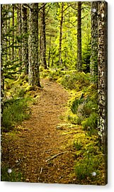 Acrylic Print featuring the photograph Carbisdale Path Scotland by Sally Ross
