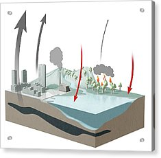 Carbon Dioxide Emission And Absorption Acrylic Print