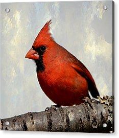 Cardinal 3 Acrylic Print