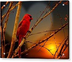 Cardinal At Sunset Valentine Acrylic Print by Barry Jones