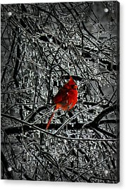 Cardinal In An Ice Storm 001 Acrylic Print by Lance Vaughn