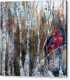 Cardinal In Birch Tree Forest Acrylic Print
