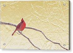 Cardinal In Gold Leaf Acrylic Print