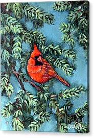 Cardinal In Spruce Acrylic Print by Inese Poga