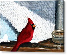 Cardinal In The Dogpound Acrylic Print by Barbara Griffin
