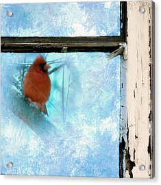 Cardinal In The Frost Acrylic Print