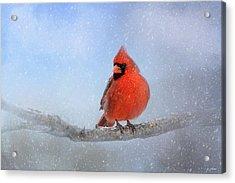 Cardinal In The Snow Acrylic Print by Jai Johnson