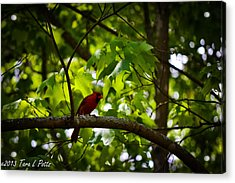 Cardinal In The Trees Acrylic Print by Tara Potts