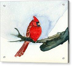 Cardinal Acrylic Print by Katherine Miller