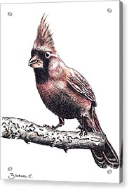 Cardinal Male Acrylic Print by Katharina Filus