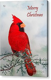 Acrylic Print featuring the painting Cardinal Merry Christmas by Laurel Best