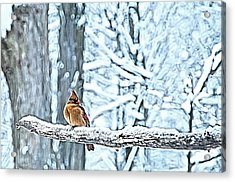 Cardinal No Mate To Keep Warm Acrylic Print by Randall Branham