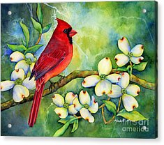 Cardinal On Dogwood Acrylic Print by Hailey E Herrera