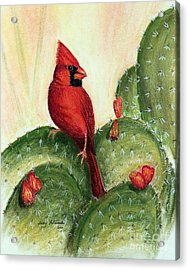 Cardinal On Prickly Pear Cactus Acrylic Print