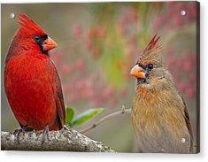 Cardinal Pair Acrylic Print