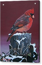Cardinal Winter Songbird Acrylic Print by Sharon Duguay