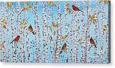 Cardinals Among The Birch-jp2061 Acrylic Print by Jean Plout