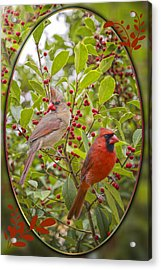 Cardinals In Holly Acrylic Print