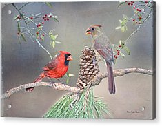 Cardinals In Pine And Holly Acrylic Print by Bonnie Barry