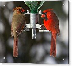 Cardinals Acrylic Print by John Kunze