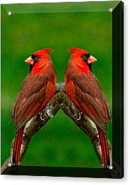 Cardinals Acrylic Print by LeeAnn McLaneGoetz McLaneGoetzStudioLLCcom