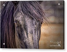 Care For Me Acrylic Print