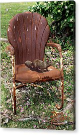 Careful Where You Sit Acrylic Print by Doug Kreuger