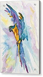 Caribbean Blue Macaw Acrylic Print