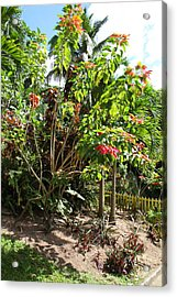 Caribbean Cruise - St Kitts - 1212187 Acrylic Print by DC Photographer