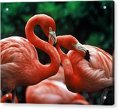 Wanna Hang Out Tonight Pinky? Acrylic Print
