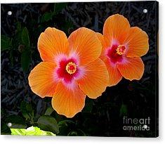 Caribbean Hibiscus Acrylic Print by Samuel James