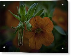 Caribbean Mix 5 Acrylic Print by Jean-Jacques Thebault
