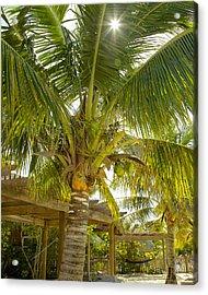 Caribbean Parasol Acrylic Print