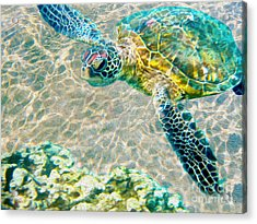 Beautiful Sea Turtle Acrylic Print by Jon Neidert