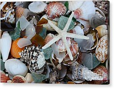 Caribbean Shells Acrylic Print by The Art of Alice Terrill