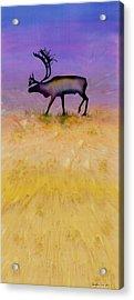 Caribou On The Tundra 2 Acrylic Print by Carolyn Doe